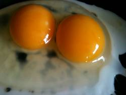 Double Yolkers0
